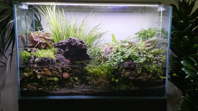 Watch and share Planted Tanks GIFs and Paludarium GIFs by rufi0h on Gfycat