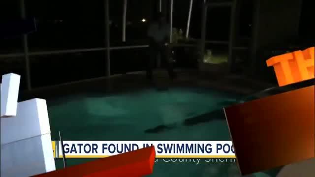 Watch and share Backyard Pool GIFs and Gator GIFs on Gfycat