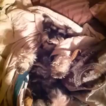 Dog, Doggie, amazing, animal, animals, answer, best, comedy, epic, fun, funny, haha, hungry, laugh, lol, overweight, pet, sleep, sleepy, video, Dog Answers to All Questions by Raising his Arm - Best Vines GIFs