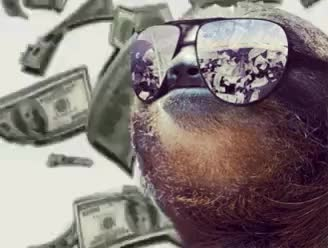 Watch and share Funny Sloth Money Falling Glasses GIFs on Gfycat