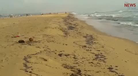 Watch and share Dear Chennai, The Oil Spill From Ennore Even Reached Marina Lighthouse   The News Minute GIFs on Gfycat