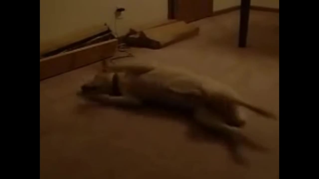 likeus, Dog dreaming runs into wall - Sleep running dog (reddit) GIFs