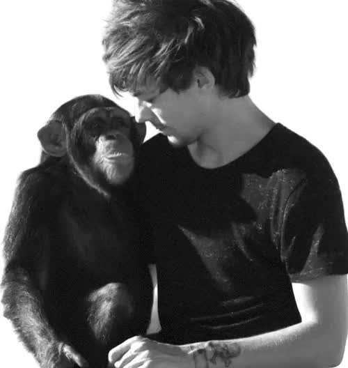 Watch this GIF on Gfycat. Discover more 1k, didn't think i could get any more jealous of that monkey!!, gif, louis, lt, ltg, smg GIFs on Gfycat