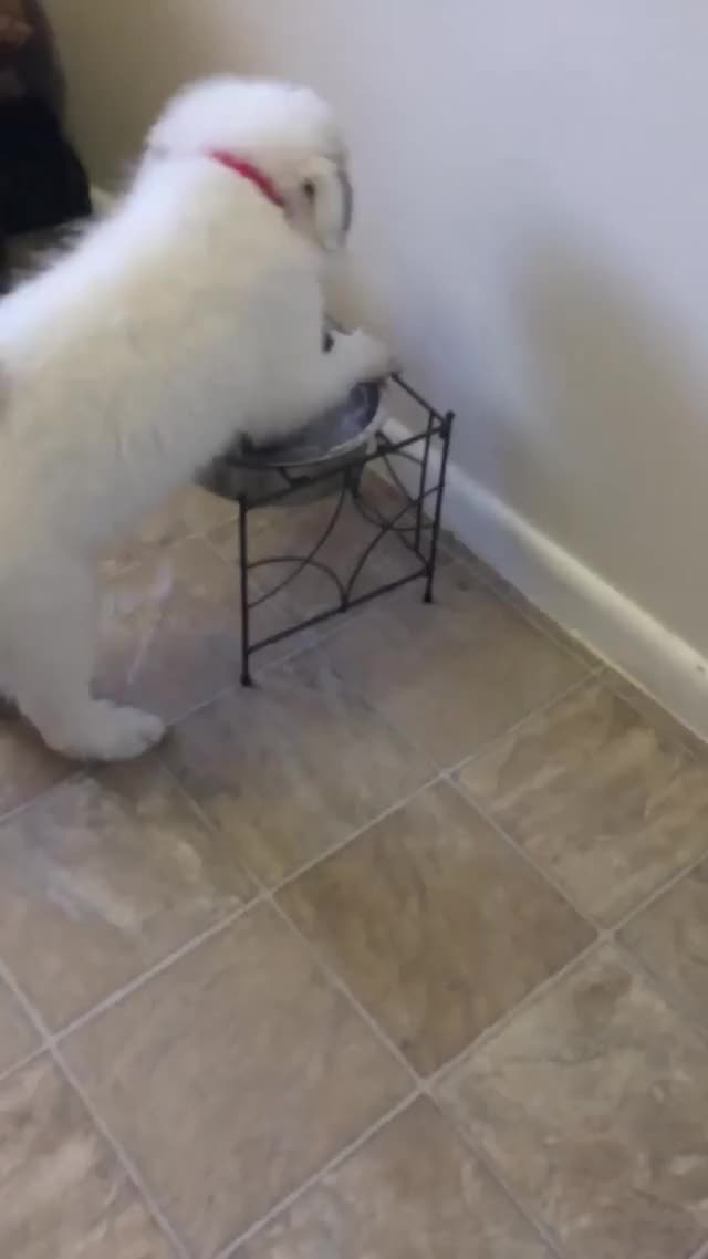 Watch and share Puppy GIFs by chompa11 on Gfycat