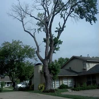 Watch and share Tree-removal-anim GIFs on Gfycat