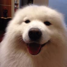 cute, dog, dog cute GIFs