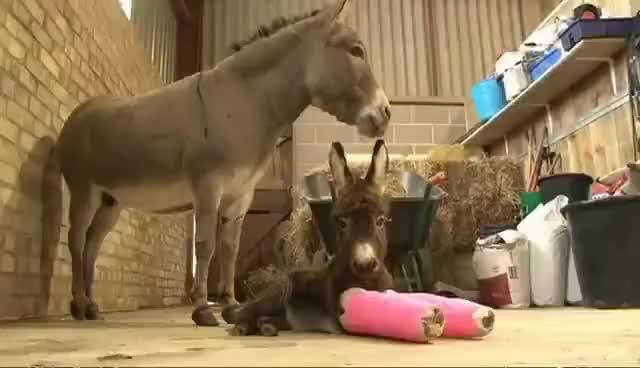 Watch and share Donkey GIFs on Gfycat