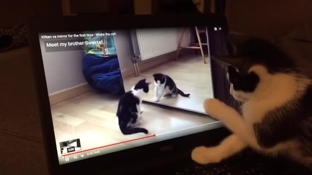 Watch and share Confused Kitten Watches Video Of Herself GIFs on Gfycat