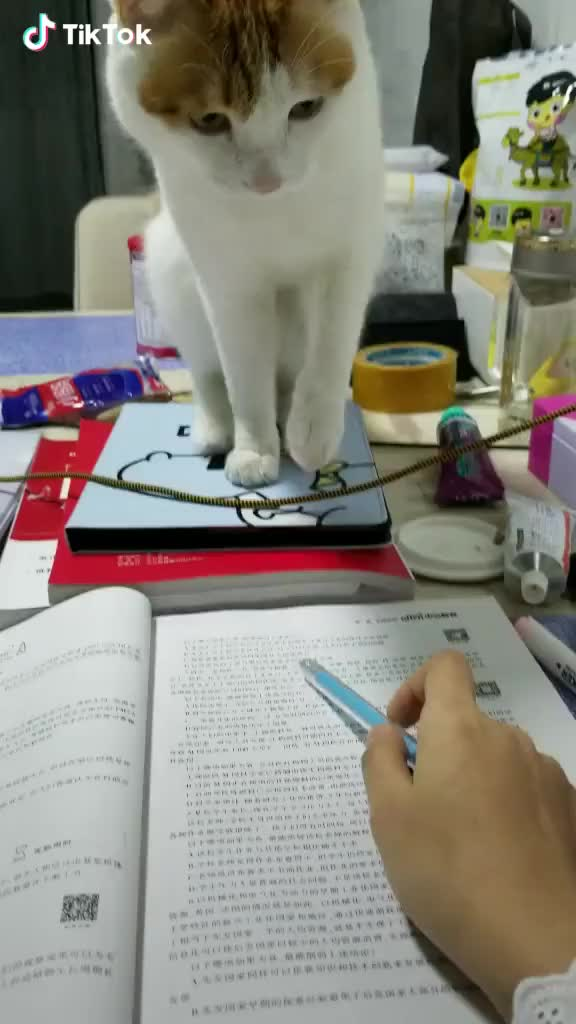 Watch and share Man:let Me Study! GIFs by TikTok on Gfycat