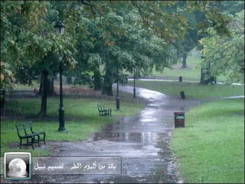 Watch and share Rain GIFs and مطر GIFs on Gfycat
