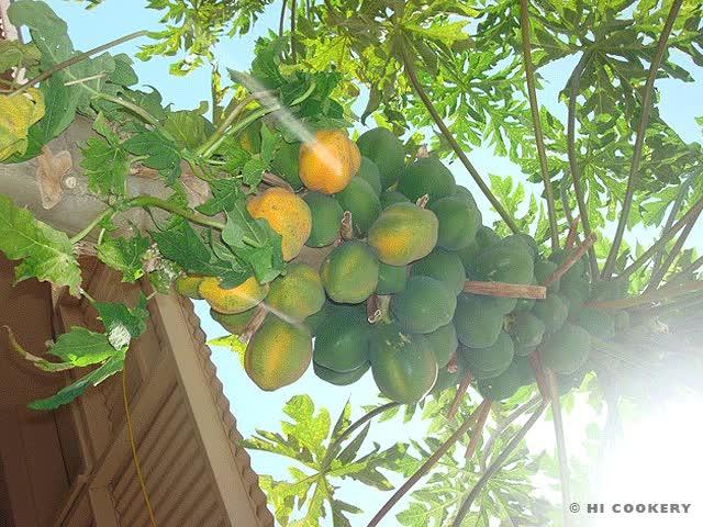 Watch and share Papayas GIFs on Gfycat