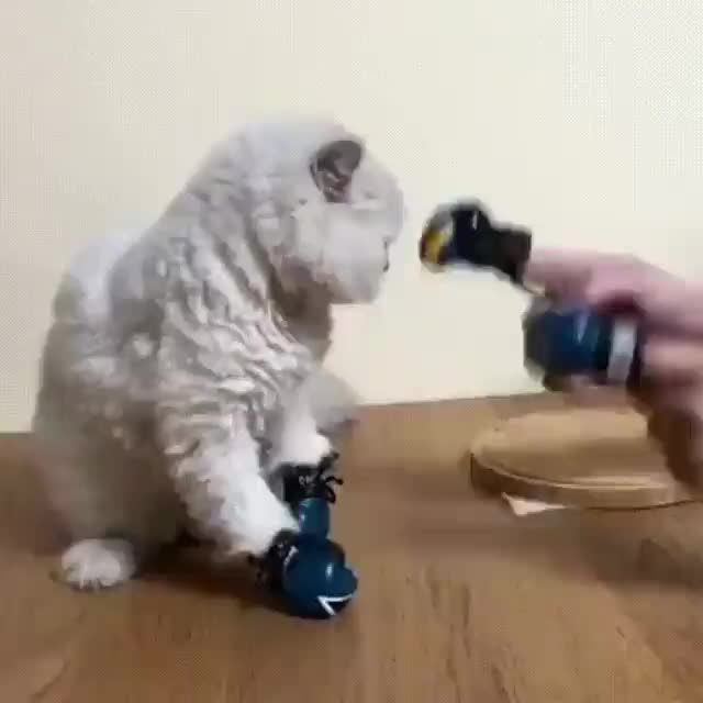 boxing cat GIFs