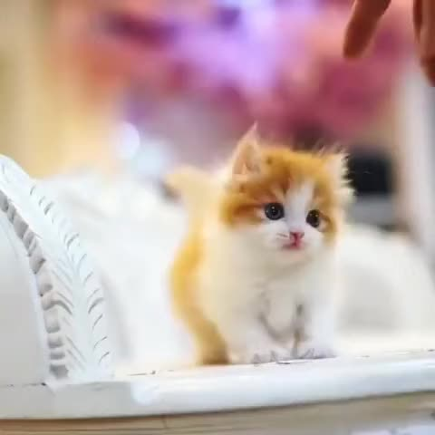 Watch and share Kitten GIFs and Cats GIFs by kitten! on Gfycat