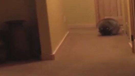 Watch and share EcR Raccoon GIFs on Gfycat