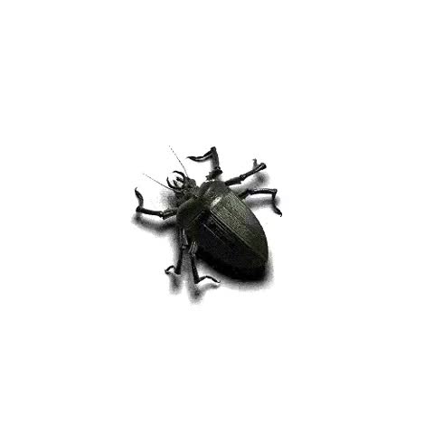 Watch and share Animated Beetle Bug GIFs on Gfycat