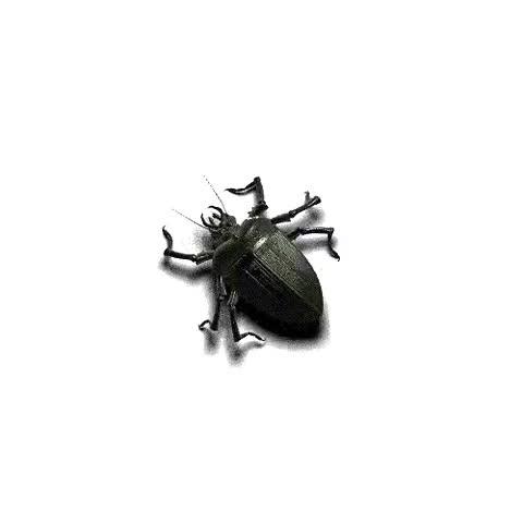 Watch and share Animated Beetle Bug GIFs on Gfycat