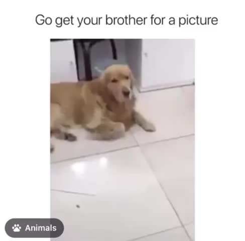 Watch and share Go Get Your Brother GIFs by YAY-GIF on Gfycat