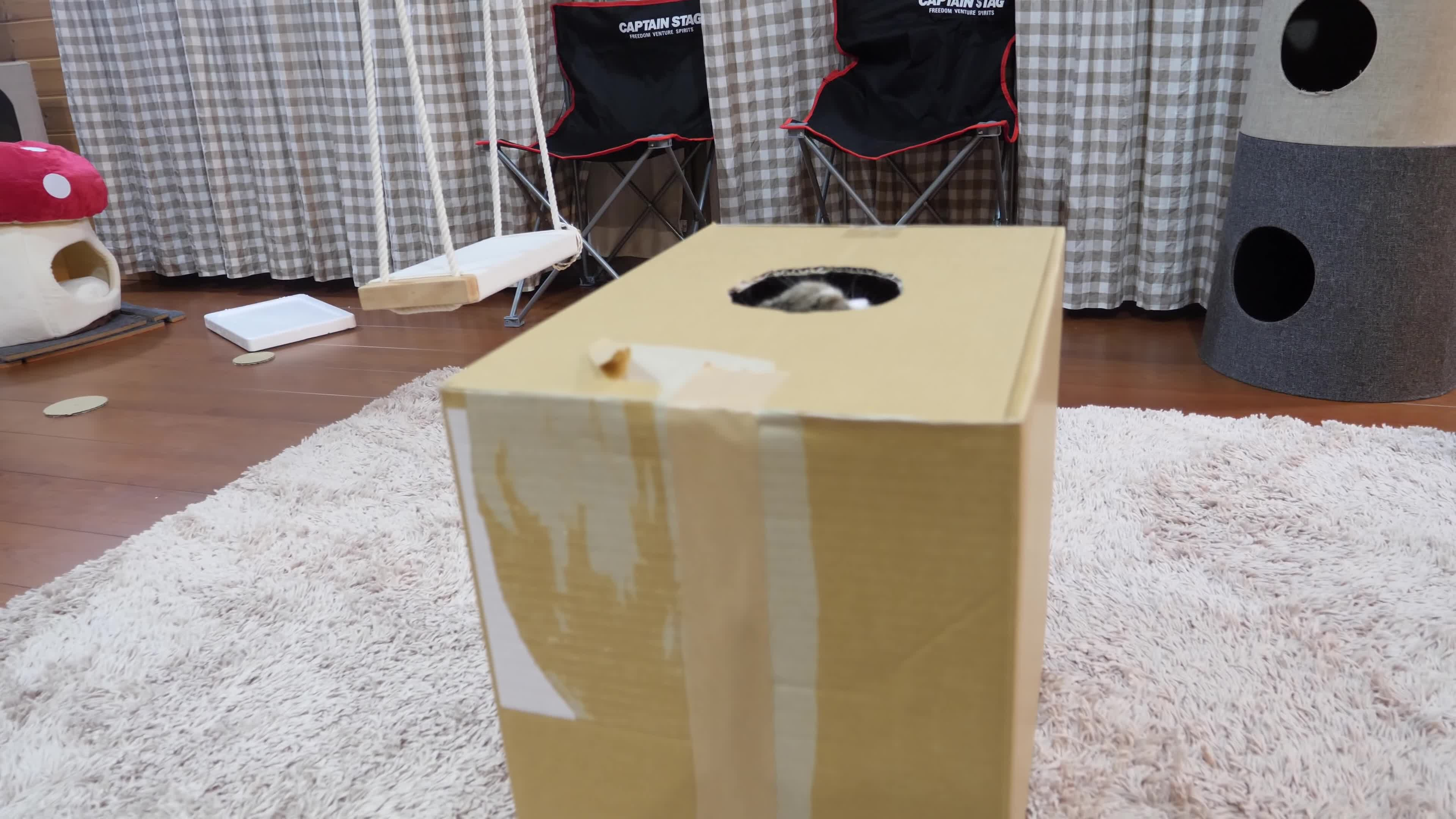 box, cat, cats, funny, maru, There was an attempt GIFs