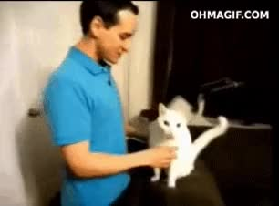 Watch interesting GIF on Gfycat. Discover more related GIFs on Gfycat