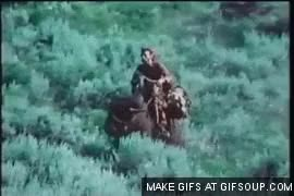 Watch and share Buffalo GIFs on Gfycat