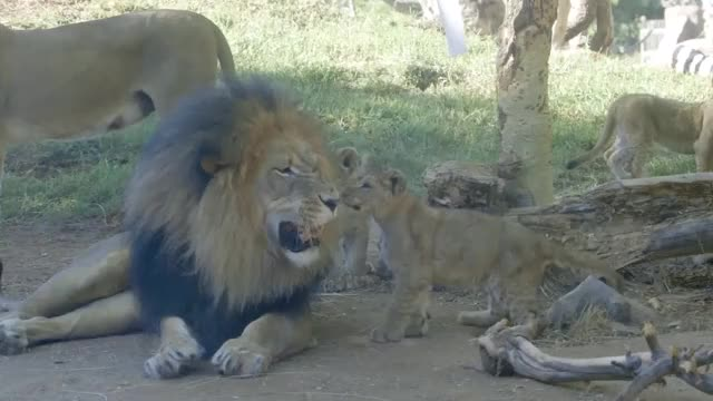 Watch and share Wildlife GIFs on Gfycat