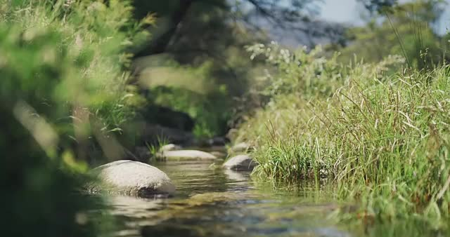 Watch and share Cinemagraph GIFs and Nature GIFs by schohns on Gfycat