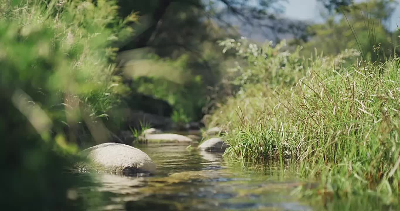 cinemagraph, nature, Creek GIFs