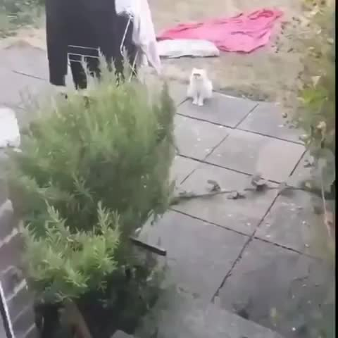 Fidus Anguis, Pets & Animals, There's a stray cat outside. GIFs