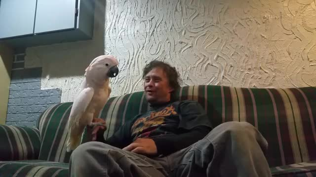 Watch Full throttle cockatoo GIF by Rhodium (@rhodium) on Gfycat. Discover more look, owner, parrot GIFs on Gfycat