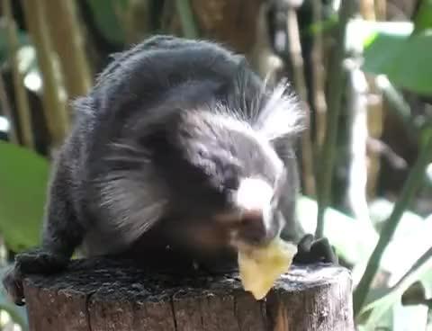 Watch and share Banana GIFs on Gfycat