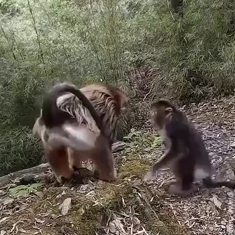 Wholesome gif of the day gif