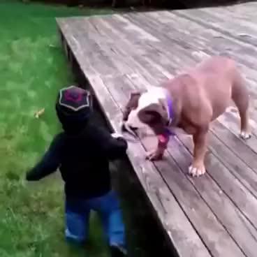 Watch and share Bulldog RKO GIFs on Gfycat