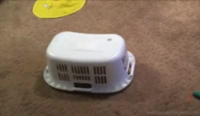 Watch and share Laundry Basket GIFs and Petcorner GIFs on Gfycat