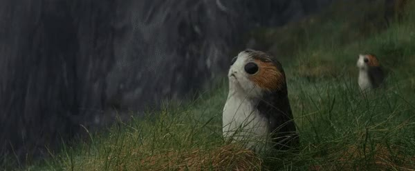 Watch and share Porg GIFs on Gfycat