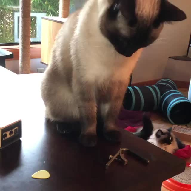 Watch and share Cat GIFs by RespectMyAuthoriteh on Gfycat