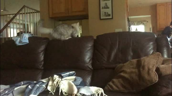 aww, awwgifs, gifs, Cat jumps off couch. GIFs