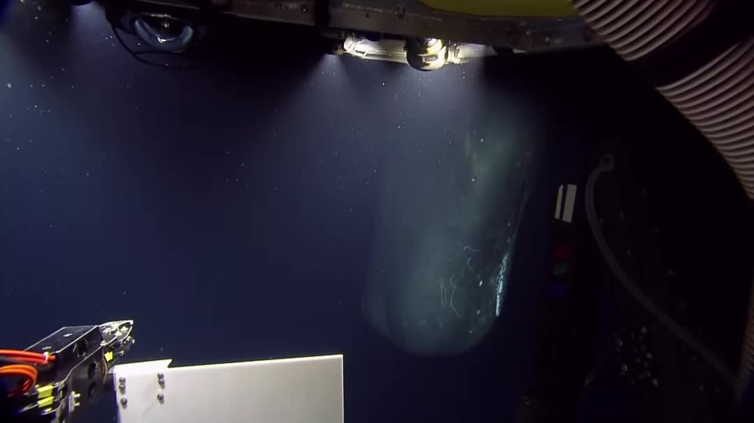 creepy_gif, deepseacreatures, thalassaphobia, Rare Encounter With A Sperm Whale At 600m Below The Surface (reddit) GIFs