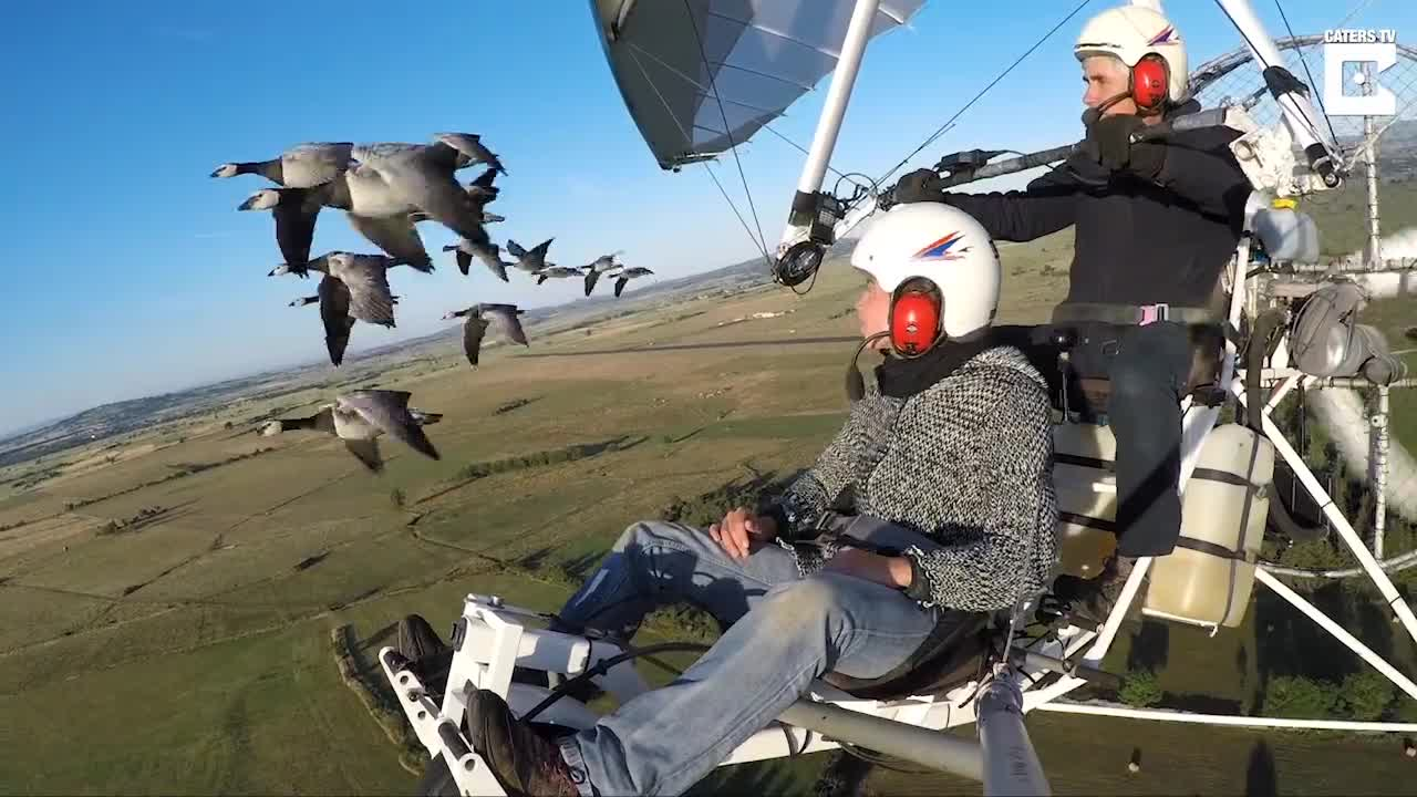 Flying with a Flock of Canadian Goose GIFs