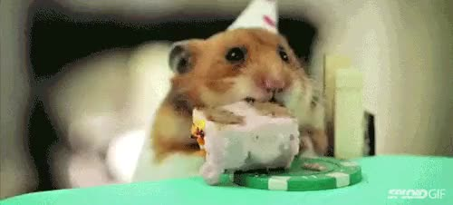 Watch and share Happy Birthday GIFs and You Are Loved GIFs on Gfycat