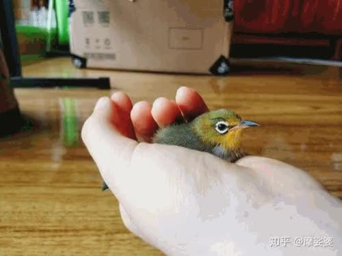 Watch and share 出售高仿假钞Telegram:【@wijth】 GIFs by ▇Telegram:@wijth▇▇▇▇▇▇▇▇▇▇▇▇▇▇ on Gfycat