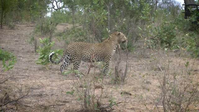 Watch and share Anderson GIFs by Londolozi Game Reserve on Gfycat