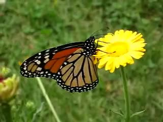 Watch and share Butterfly GIFs and Gardening GIFs on Gfycat