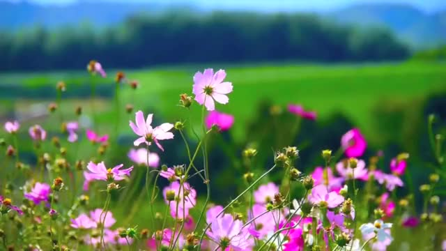 Watch and share Flowers - Video Background HD 1080p GIFs on Gfycat