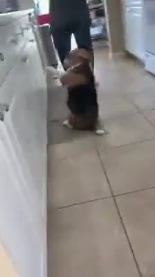 Doggo showing off his skills
