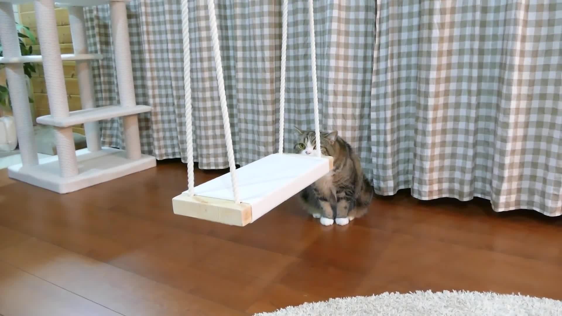 cat, kitten, ブランコとねこ。-Swing and Maru.- GIFs