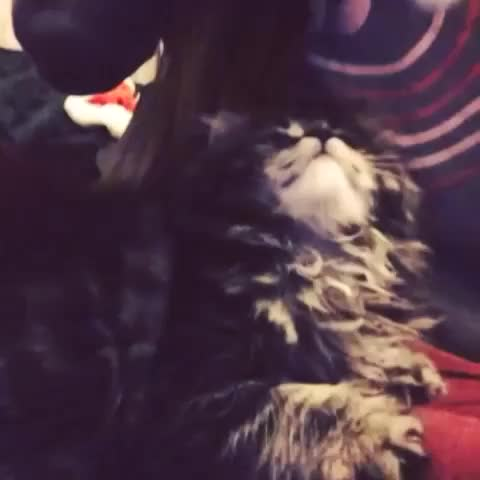 Watch and share Christmas GIFs and Cat GIFs by life.of.shannen on Gfycat