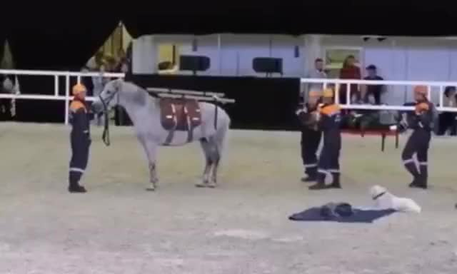 Watch and share Dr. Horse GIFs on Gfycat