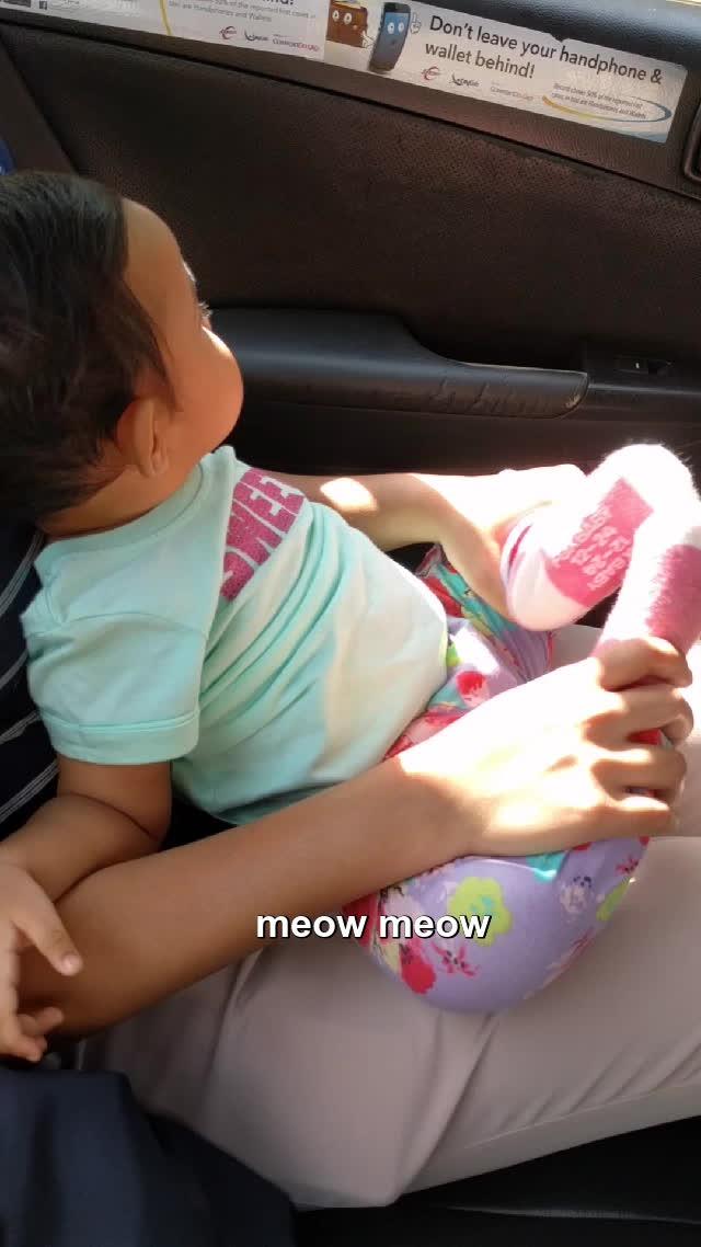 cat, kitten, kitty, meow, meow meow  GIFs
