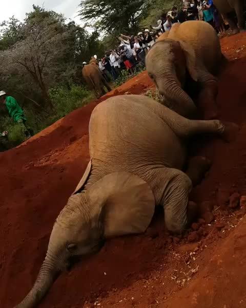 africa, africananimals, babyelephants, dswt, elephant, elephantlove, elephants, emi. 🇦🇲 🇸🇪, kenya, nairobi, wildlife, Cuando no te gusta dormir abrazadxs pero a tu pareja sí... - - @sheldricktrust - - - GIFs