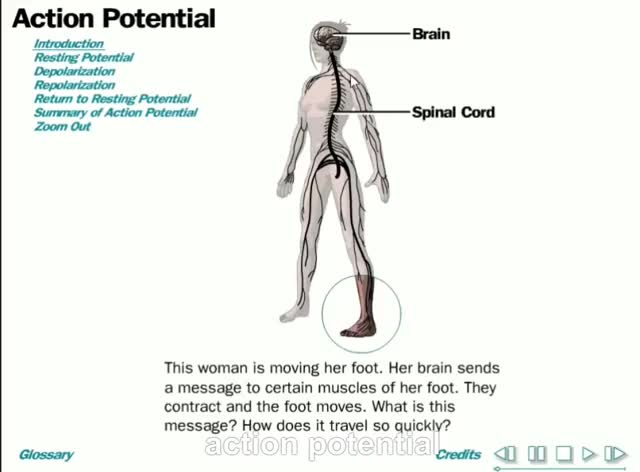 Watch and share ACTION POTENTIAL GIFs on Gfycat
